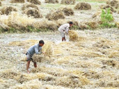 2496 farmers Did not get insurance claim
