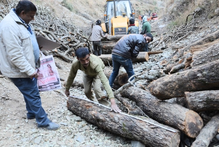 hp high court ordered to register fir against forest employees in koti illicit felling case