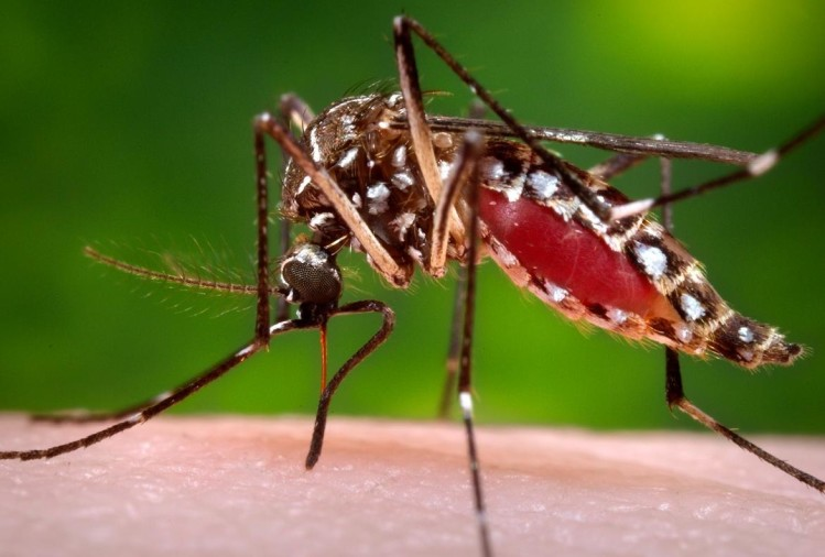 know why mosquitoes end is dangerous for humans
