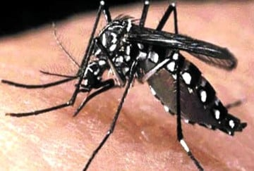 35 new cases of dengue reported in himachal
