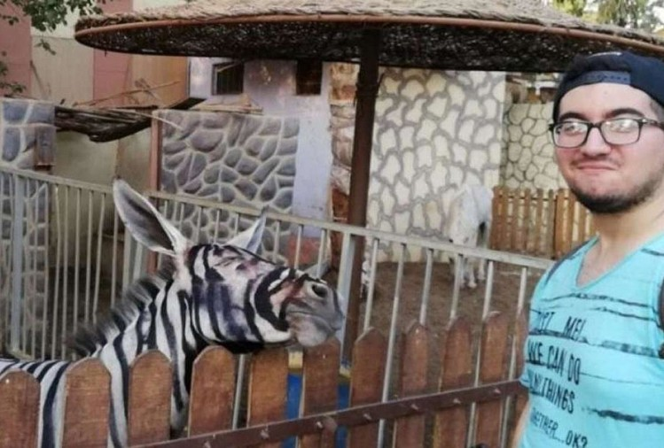 Zoo workers of Egypt painted donkey to look like a zebra