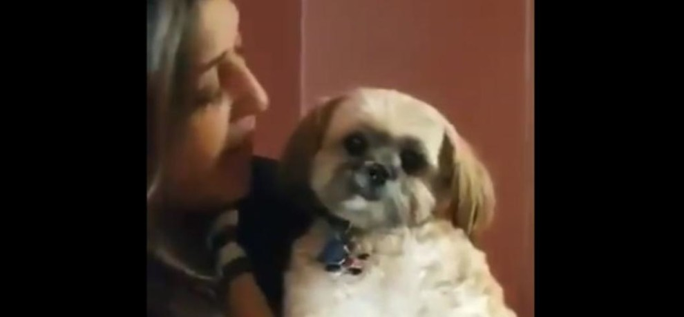 Cute Little Dog Predicts Modi Government In Gujarat, Video Goes Viral
